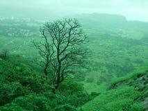 Árvore estéril em um contexto verde Fotografia de Stock Royalty Free