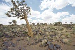 Árvore estando sozinha Fotos de Stock