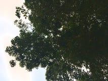 Árvore estendido e céu imagem de stock royalty free