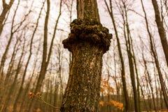 Árvore estranha Imagens de Stock