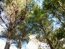 Árvore exterior Imagens de Stock