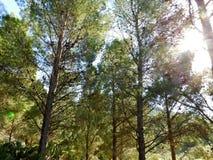 Árvore exterior Fotografia de Stock Royalty Free