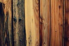 Árvore (fá) Imagem de Stock