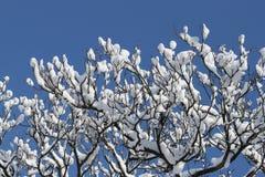 Árvore fantástica na neve Imagens de Stock Royalty Free