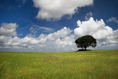 Árvore feliz fotografia de stock