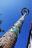 Árvore festiva Fotos de Stock