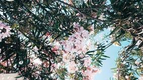 Árvore florescida da flor video estoque