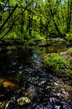 ?rvore Forest Colours Nature Difference River imagens de stock