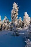 Árvore fresca da neve Imagem de Stock Royalty Free