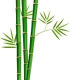 Árvore fresca e folhas de bambu isoladas no branco ilustração do vetor