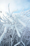 Árvore geada no inverno Fotos de Stock Royalty Free