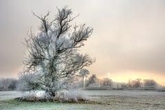 Árvore geada só em uma noite nevoenta do inverno imagem de stock royalty free
