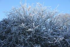 Árvore gelada Imagens de Stock