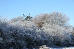 Árvore gelada Fotos de Stock Royalty Free
