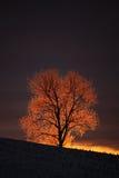 Árvore gelado fotografia de stock royalty free