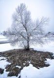 Árvore gelado na paisagem do inverno imagem de stock