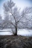 Árvore gelado na paisagem do inverno imagens de stock