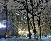 árvore Gelo-coberta no parque da cidade da noite. Imagens de Stock