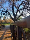 Árvore gigante da pesca à corrica pela ponte fotos de stock