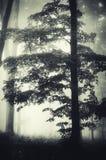 Árvore gigante em madeiras encantados escuras Fotos de Stock