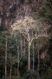 Árvore gigante majestosa da selva, fundo surpreendente da floresta Foto de Stock