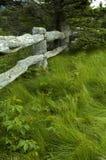 Árvore, grama, cerca de madeira Fotografia de Stock