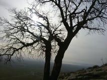Árvore, grama, sol Imagens de Stock Royalty Free