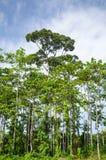 Árvore grande Foto de Stock