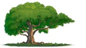 Árvore grande Foto de Stock Royalty Free
