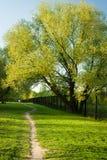 Árvore grande Ash With Pathway In Park foto de stock royalty free