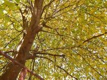 Árvore grande bonita Imagens de Stock Royalty Free