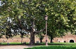 Árvore grande com banco Fotos de Stock Royalty Free