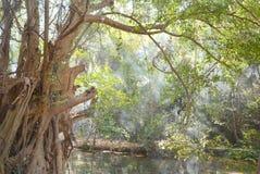 Árvore grande com fumo Fotografia de Stock Royalty Free