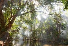 Árvore grande com fumo Fotos de Stock