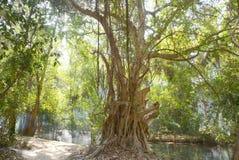 Árvore grande com fumo Fotos de Stock Royalty Free