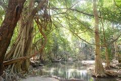 Árvore grande com fumo Imagem de Stock Royalty Free