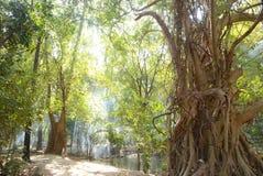 Árvore grande com fumo Imagem de Stock