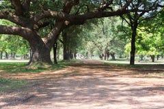 Árvore grande com a passagem do solo Imagens de Stock