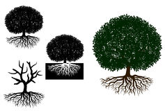 Árvore grande com raizes Foto de Stock Royalty Free