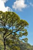 Árvore grande e céu azul imagem de stock