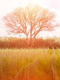 Árvore grande e campo amarelo com efeito do filtro jpg Fotografia de Stock Royalty Free