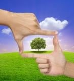 Árvore grande em um frame das mãos humanas fotografia de stock royalty free