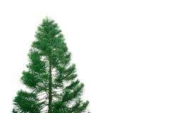 A árvore grande isolada no branco Fotos de Stock Royalty Free