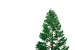 A árvore grande isolada no branco Foto de Stock