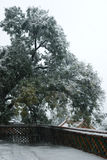 Árvore grande na neve Imagens de Stock Royalty Free