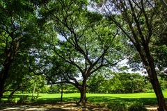 Árvore grande no jardim Fotografia de Stock