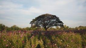Árvore grande no parque Fotografia de Stock Royalty Free