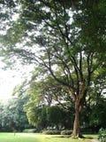 Árvore grande para a vida imagem de stock royalty free