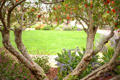 Árvore Heart-Shaped foto de stock royalty free