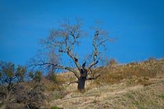 Árvore hirto de medo Santa Clarita foto de stock royalty free